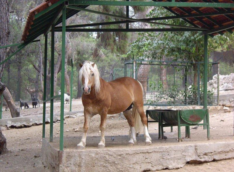 в зоопарке в Анталии