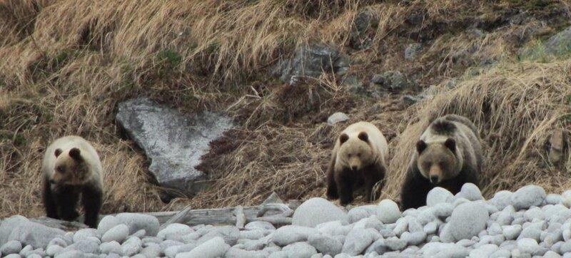 медведи3.jpg