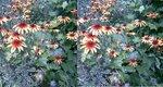 цветы стерео