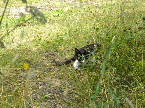 Лесная кошка