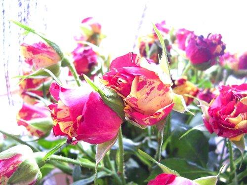 Влюбленные розы*
