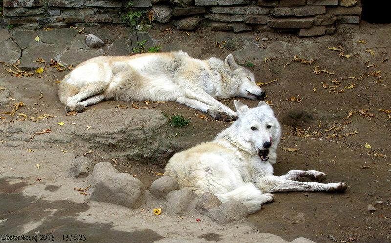 1378.23 Тундровые волки
