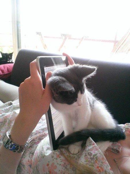 коты мешают человеку работать за компьютером 2