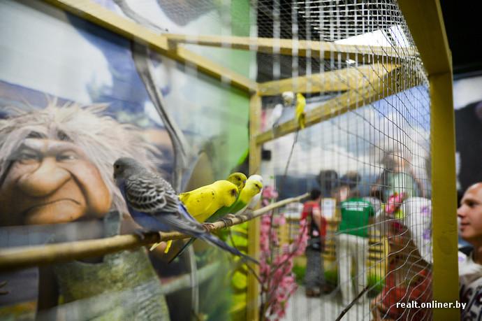 В Минске открывается новый зоопарк: животных можно кормить и гладить