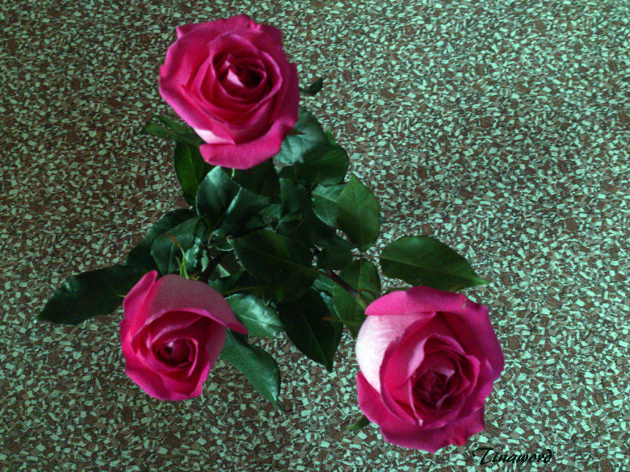 розы-4.jpg