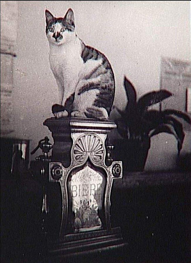 1944. Кот из бистро
