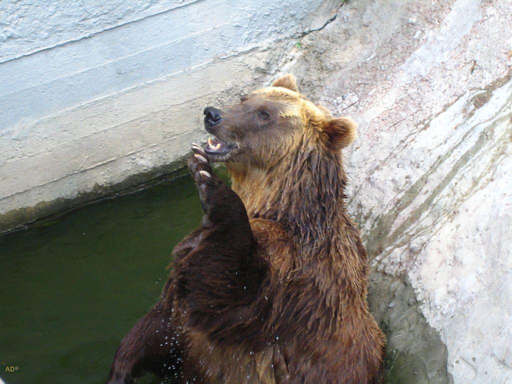 Зоопарк 2006