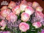 Друзья, эти розы для вас!!!