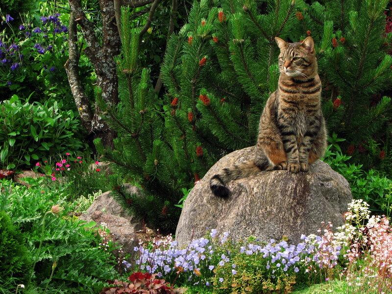 Кот ученый.....садовод:)