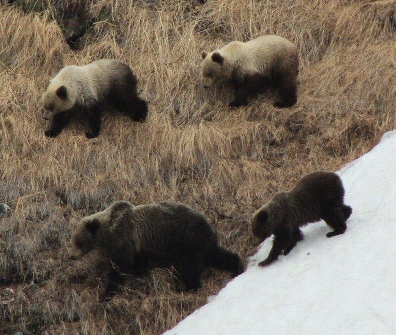 медведи2.jpg