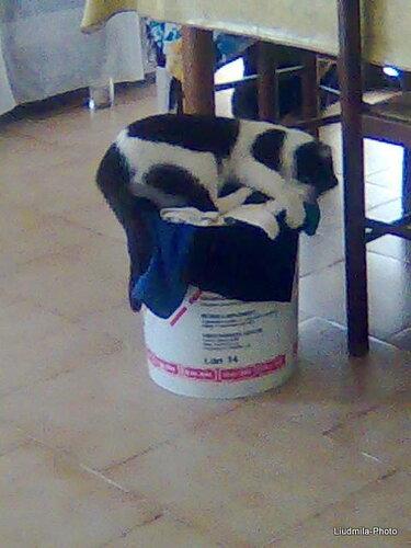 Бася спит