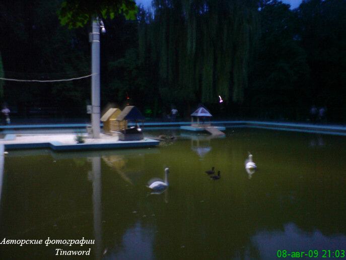 Парк лебеди вечер