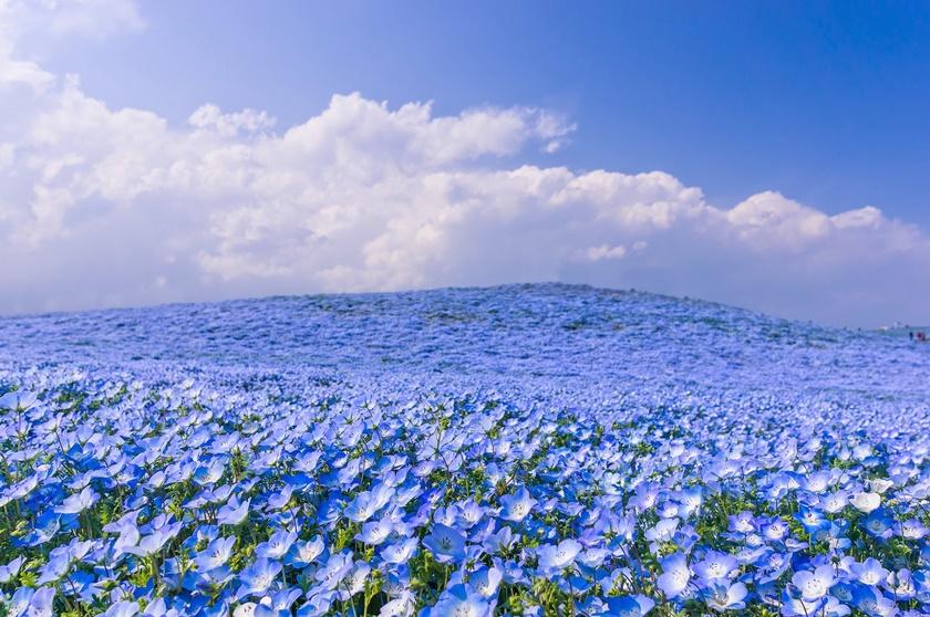 Живописный японский парк Хитати Кайхин 0 1422e4 e342e9ce orig