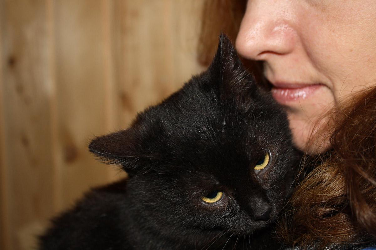 Марсель котенок из приюта догпорт