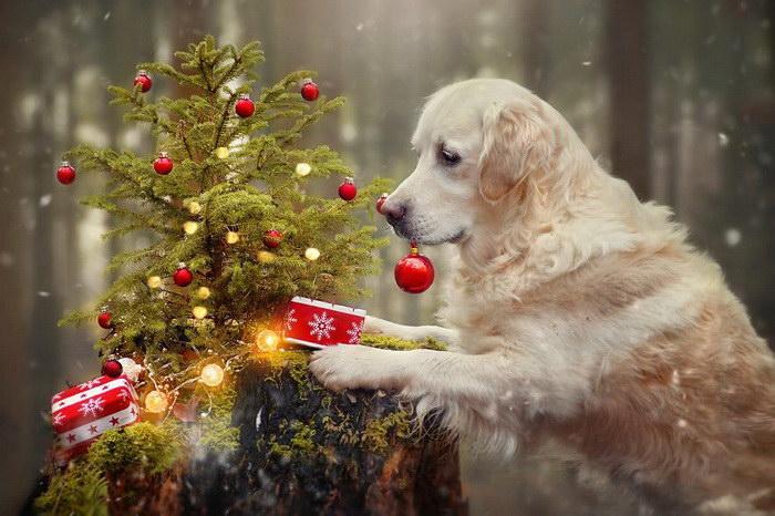 Рождественские пёсики Габи Стиклер (Gabi Stickler)