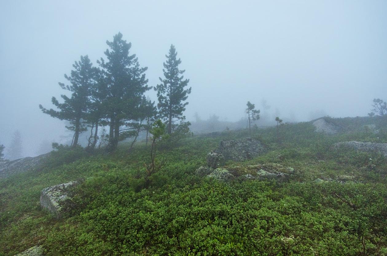Тихие песни тумана