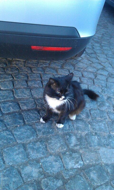 Котик возле Музкома, Питер