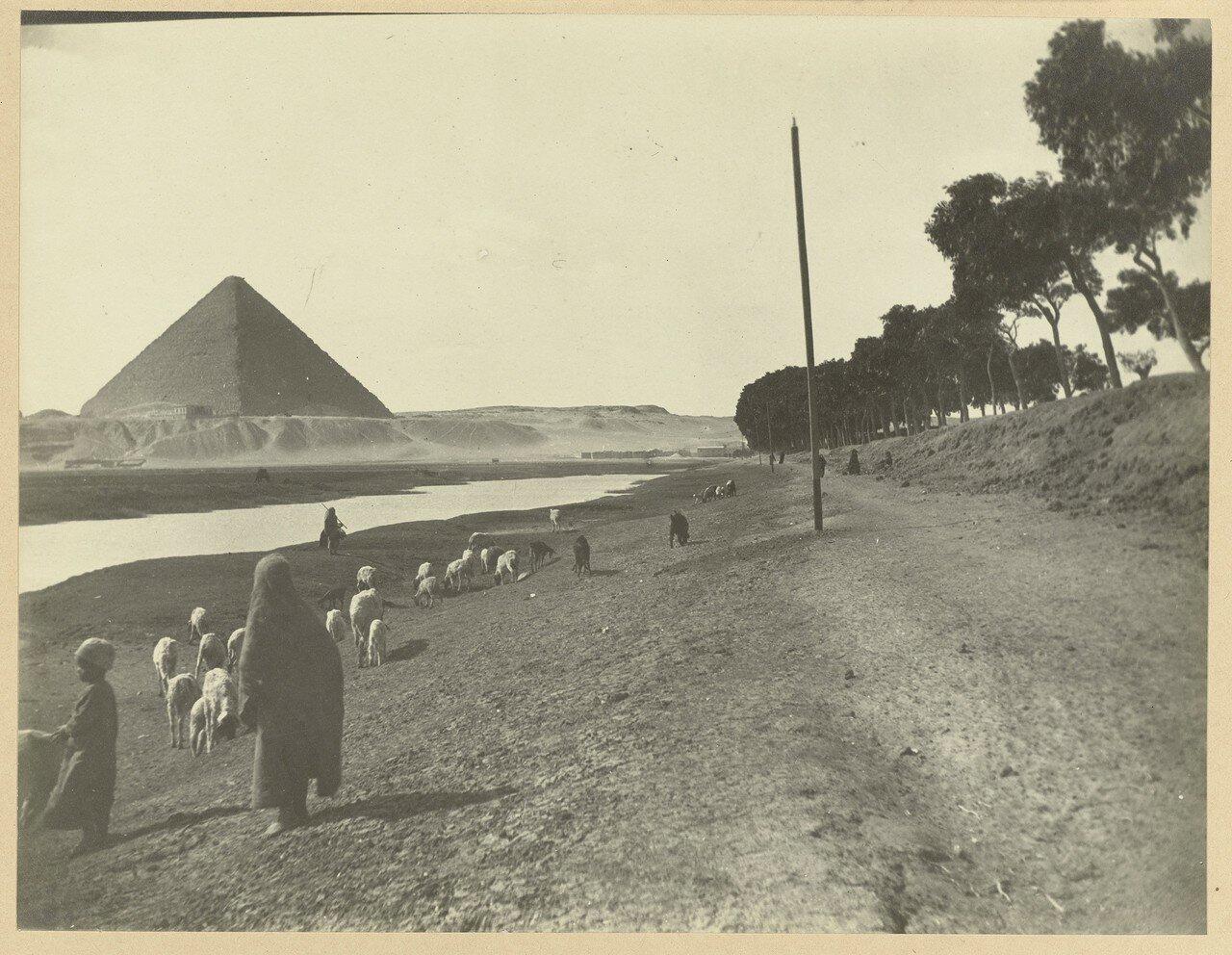 Гиза. Стадо коз с пастухом на фоне пирамиды Хеопса