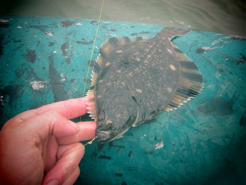 Последние годы биоресурсы моря формировались, в основном, за счет трески, пикши