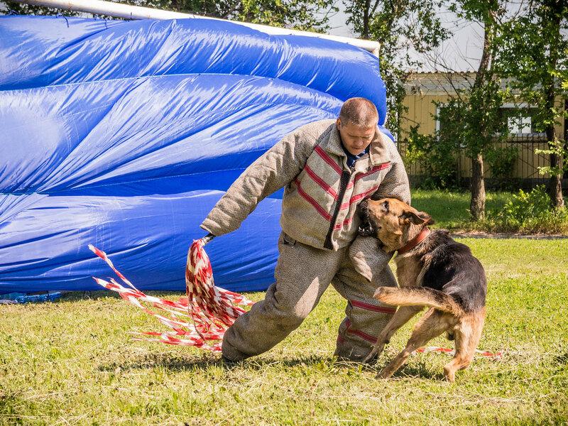 Соревнования служебных собак. Кемерово