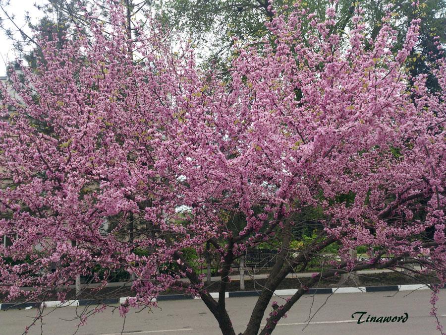 цветение-.jpg