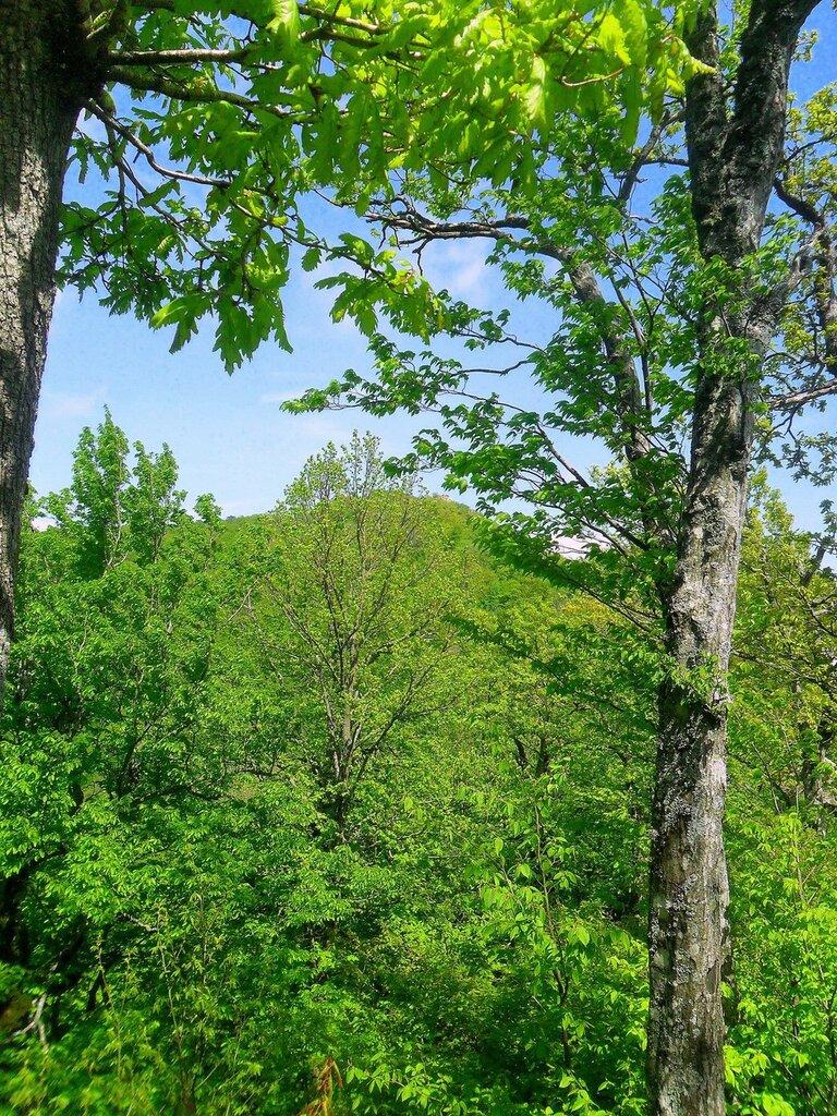 Лес, в мае, на горной тропе ... SAM_6996.JPG
