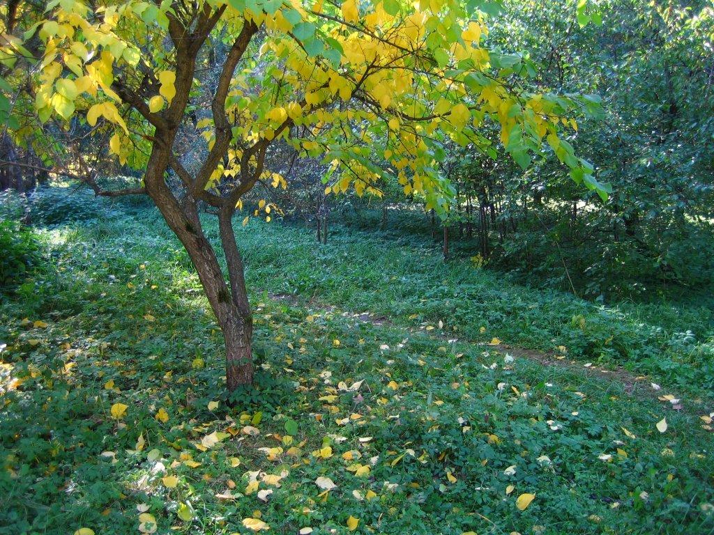 Прогулки по осеннему ботаническому саду