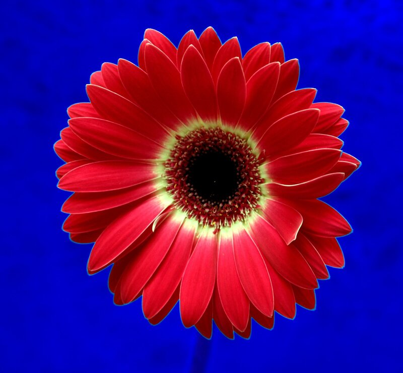 http://img-fotki.yandex.ru/get/3514/avzemskov.10/0_30564_41fe14fb_XL.jpg