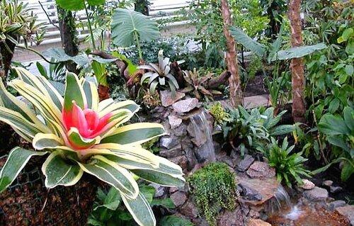 Экспозиция тропических растений