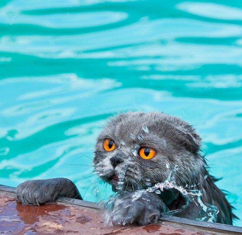 Послеобеденное купание. И один Мохито, пожжжжалуйста, я еще кружок проплыву!