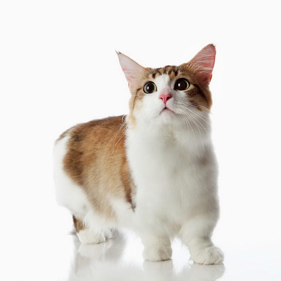 Граціозний котик