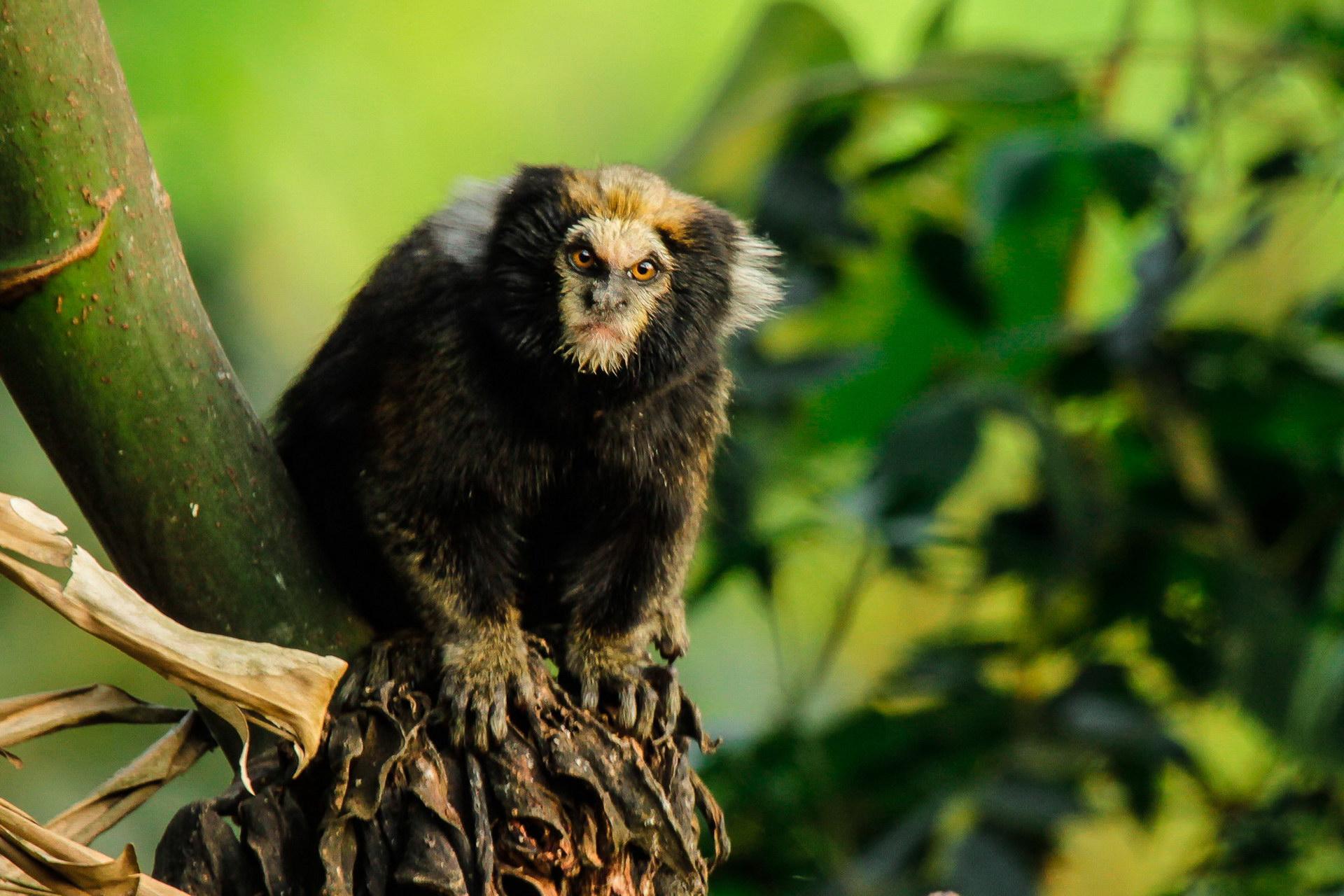 Страшенно зла мавпочка
