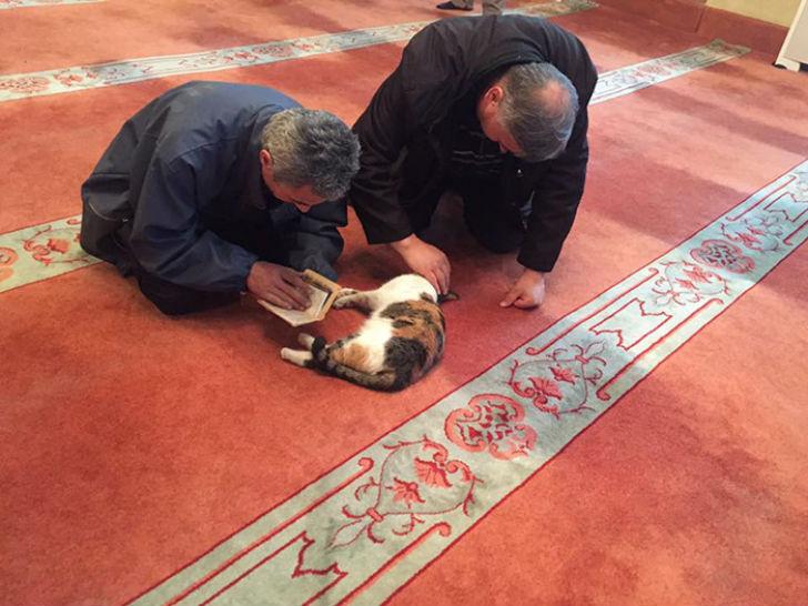 Приходящим в мечеть, похоже, нравится такая компания.