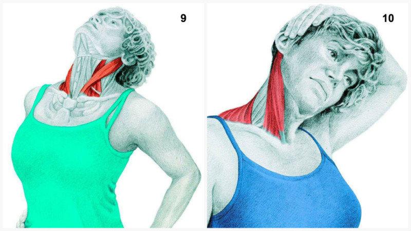 10. Боковая растяжка мышц шеи с рук помощи.11. Растяжкаучастка поясничной и четырехглавой мышц.