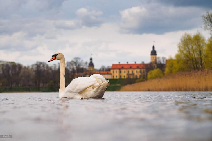 Весна в Беларуси (24 фото)