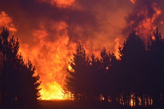 ВБурятии пожар вдетском лагере «Дружба» перекинулся налесную зону