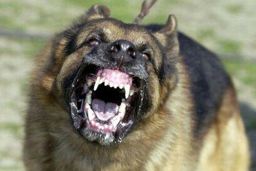 Самые опасные породы собак в мире