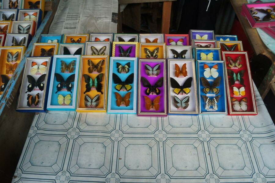 Бабочки в сувенирке