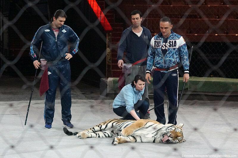 Весна. Назарова. тигры. 29.03.16.02..jpg