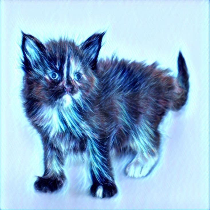 котенок обработан в призме
