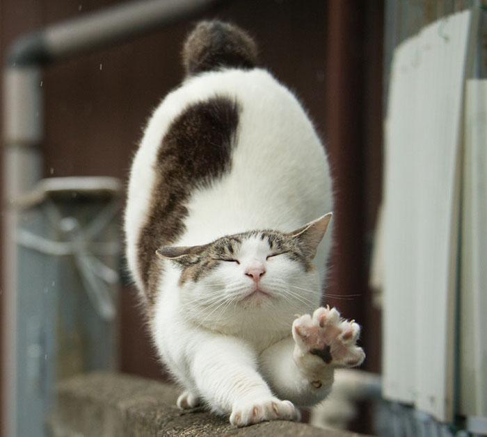 1557618851cb9c2-576187ff284f7-tokyo-stray-cat-photography-busanyan-masayuki-oki-japan-a50_crop_1200.jpg