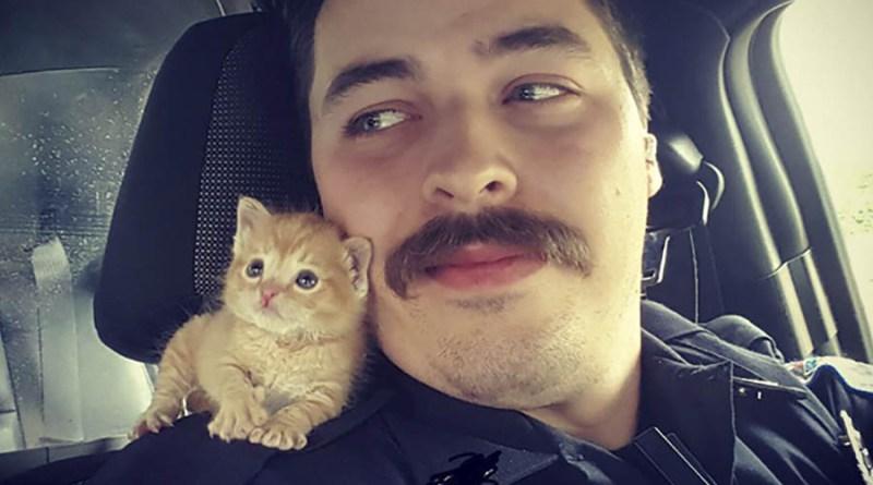 Полицейский спас котенка, теперь они служат вместе