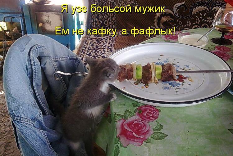 Весёлые Животные Картинки с Надписью