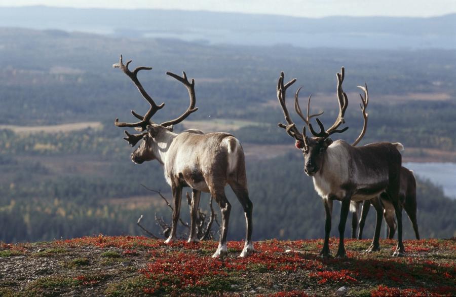 Волшебная сказка Финляндии (15 фото)