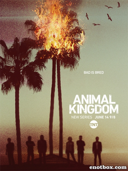 По волчьим законам / Animal Kingdom - Полный 1 сезон [2016, WEB-DLRip | WEB-DL 720p, 1080p] (LostFilm | NewStudio)