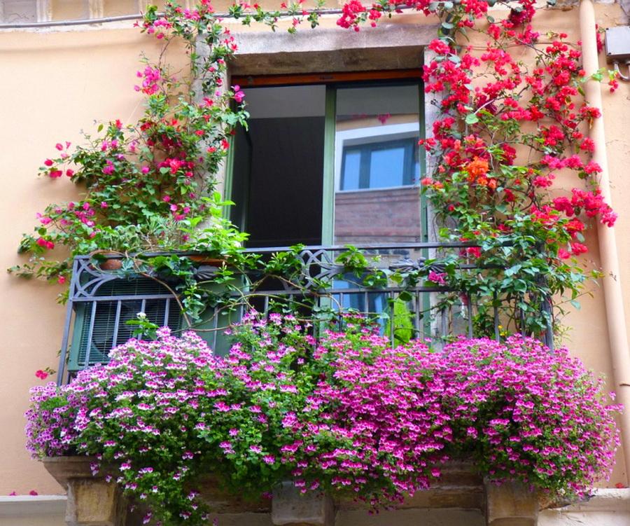 Оформление балкона цветами - фото и названия цветов. идеи оз.