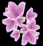 «Magic of Flowers» 0_7c4db_c507673d_S