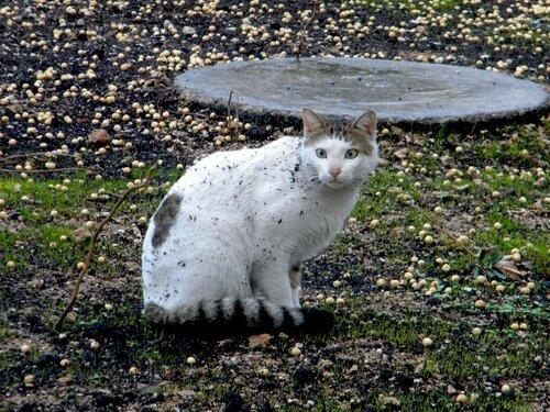 Кошка после бури (Турция)