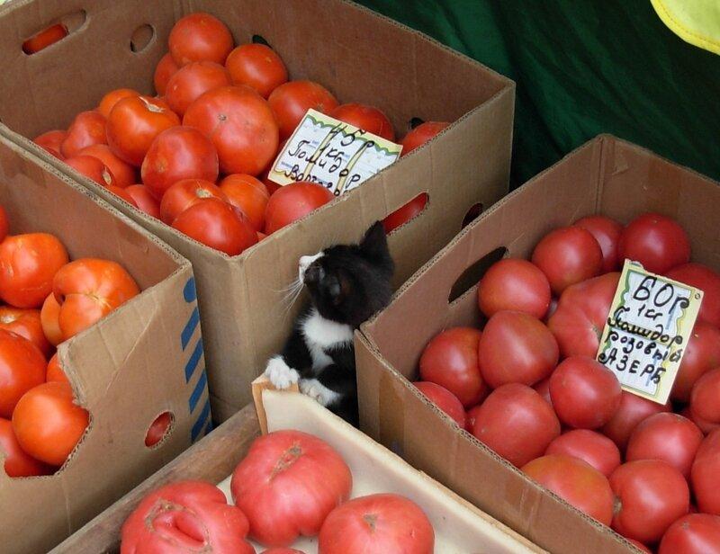 Котенок помидорный
