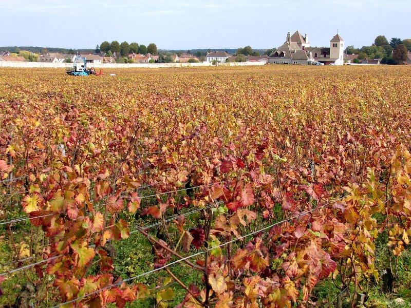 Франция,Бордо,виноградники